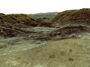 La lande ressemble à un désert.jpg